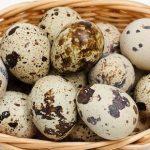 raising coturnix quail from eggs