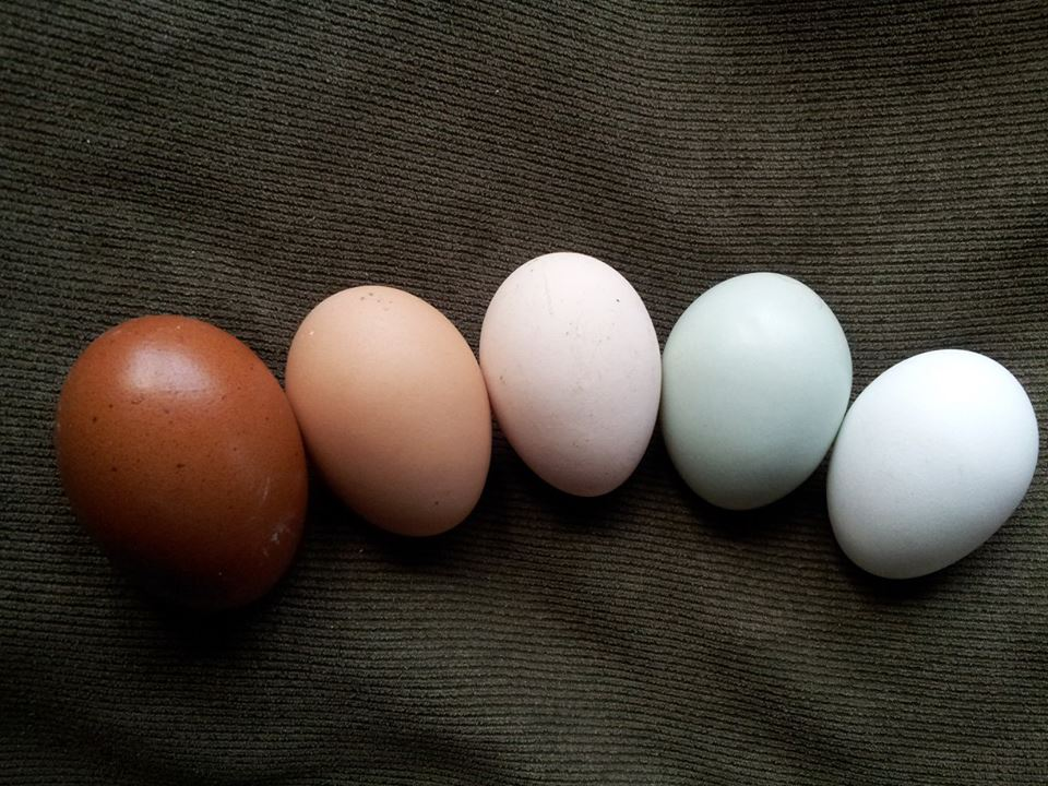Those Colorful Eggs