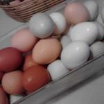 Eggscellent Eggs!