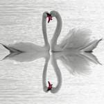 Swan Care