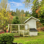Top 5 Tips for Keeping Your Chicken Coop Clean