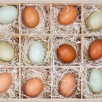 Coloring Eggs: How do the Chickens do it?