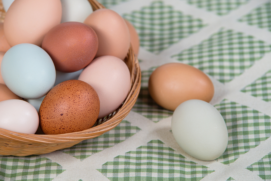 Assortment of different color fresh chicken eggs in a basket closeup with shallow depth of field. Green shade kitchen textile background.