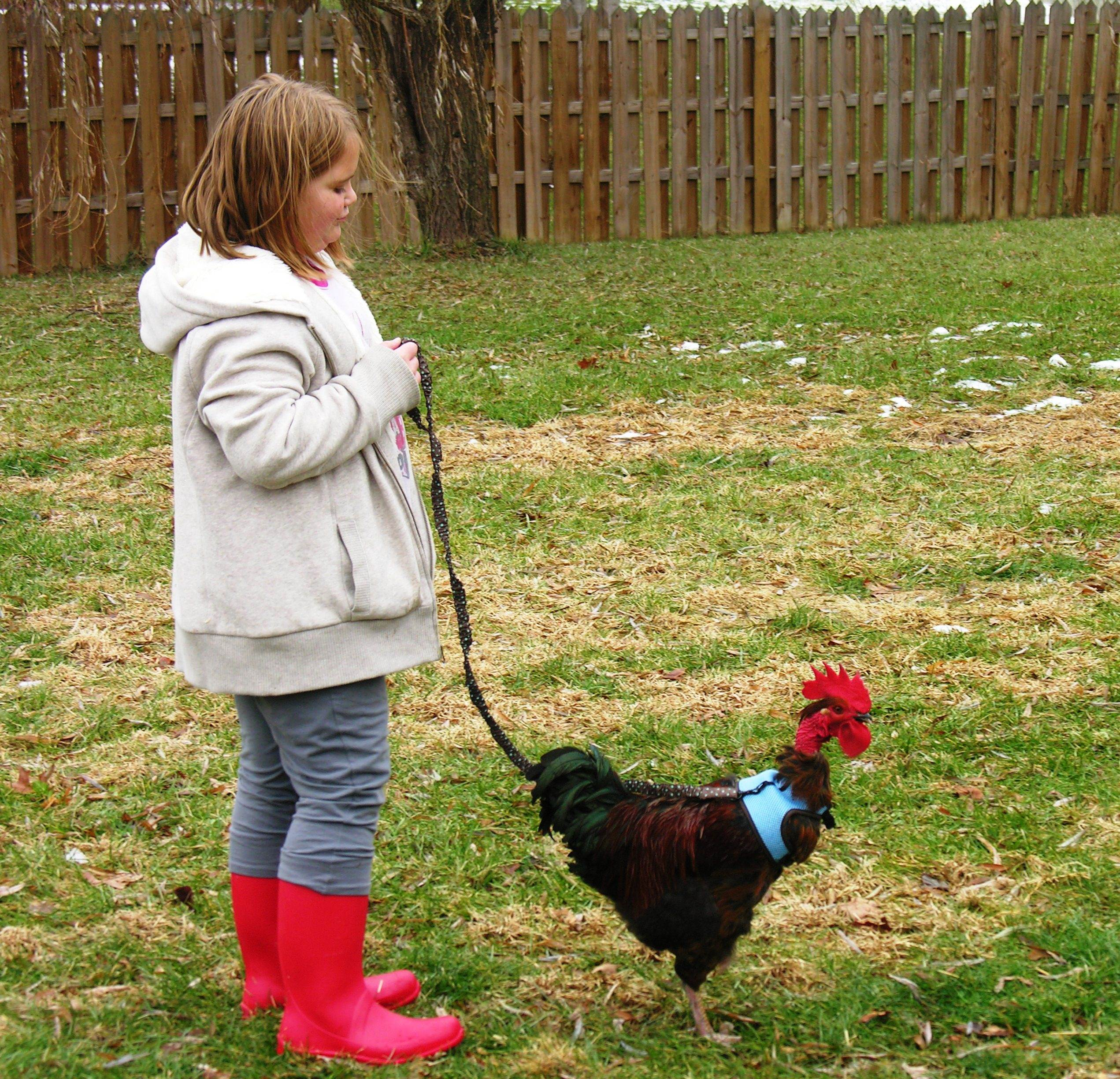 We Keep 18 Different Breeds Of Chickens.