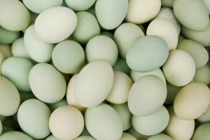 Greenish Eggs