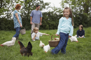 Gathering Eggs and hanging out with the flock