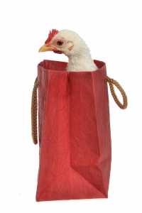 Chicken present