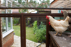 Inside The Chicken Run