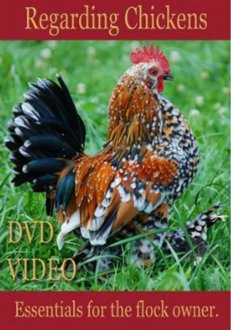 Regarding Chickens: Essentials for the flock owner DVD