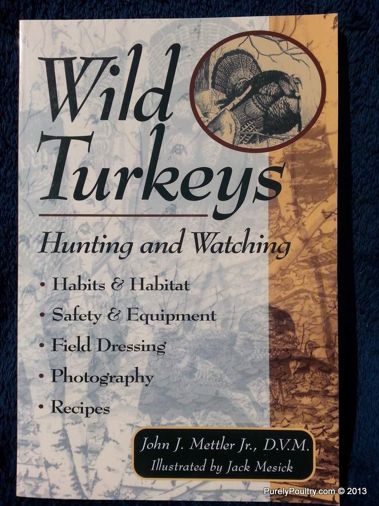 Wild Turkeys Hunting and Watching