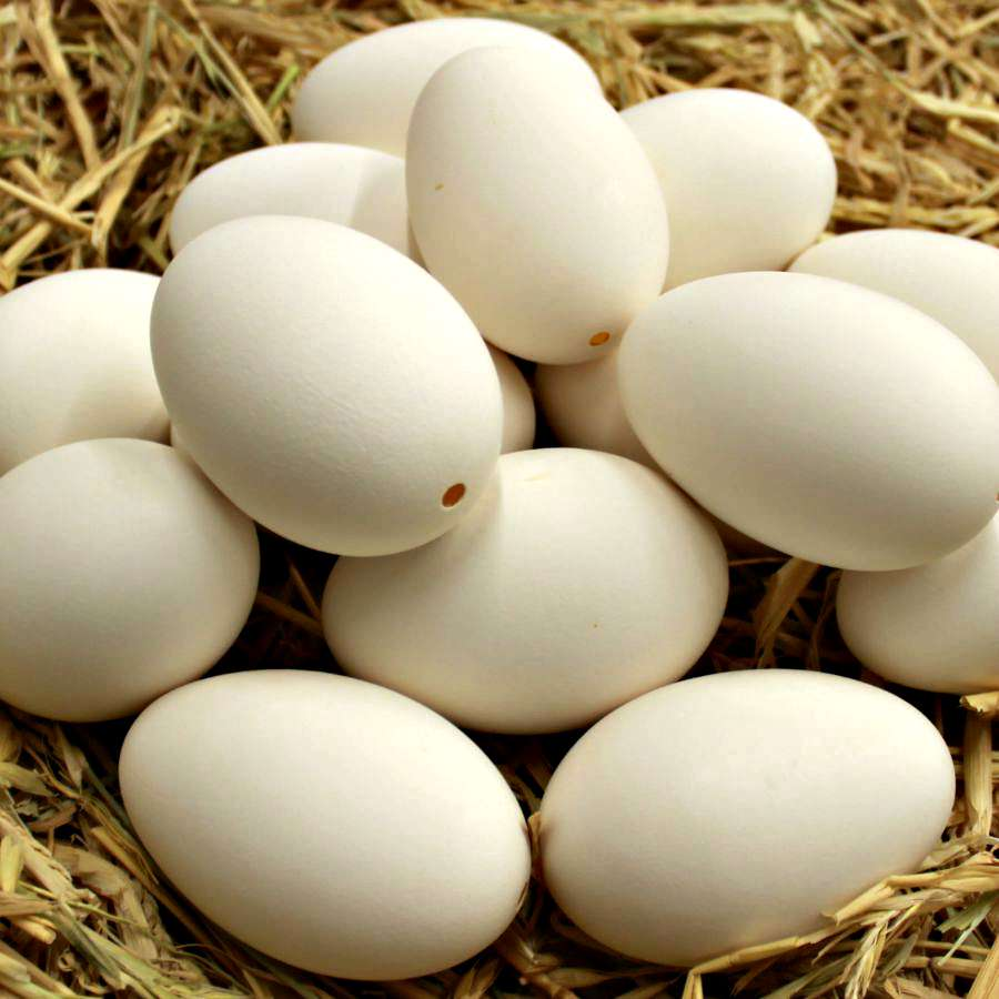 Blown Goose Eggs