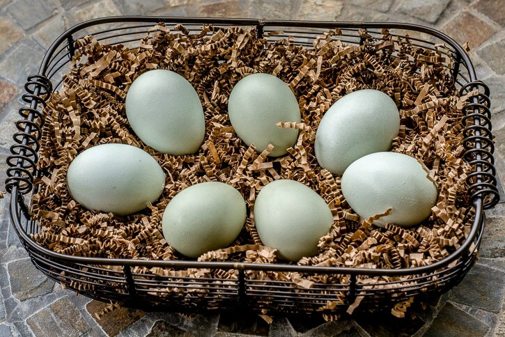 Crested Cream Legbar Chicken Eggs