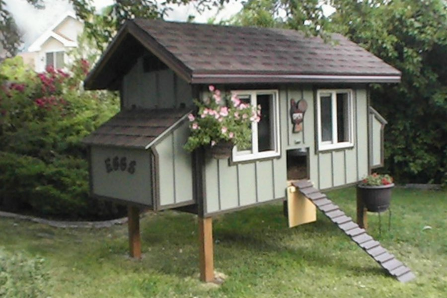 Daisy chicken coop plan purely poultry for Chicken and duck coop