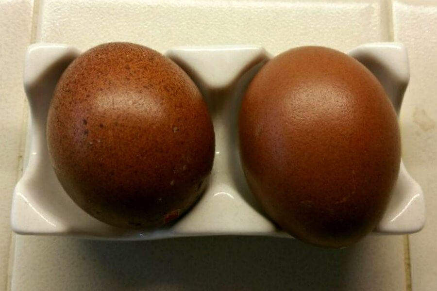 Day Old Chicks Assortment of Dark Brown Egg Layers
